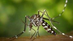 Primeiro caso de Chikungunya no ano é registrado em Taubaté
